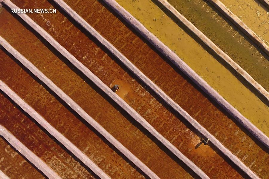 Посадка лотоса в провинции Хэбэй