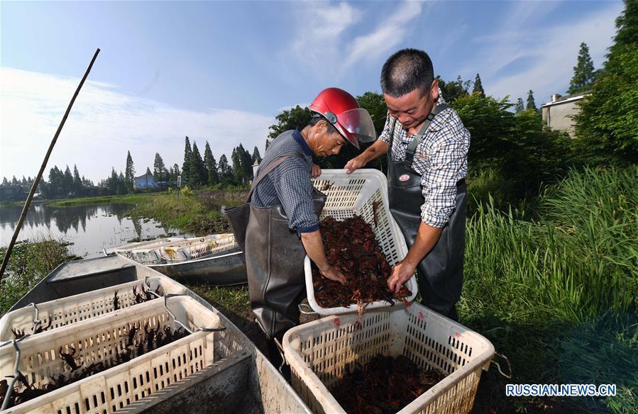 Раковые фермы на озере Дунтинху