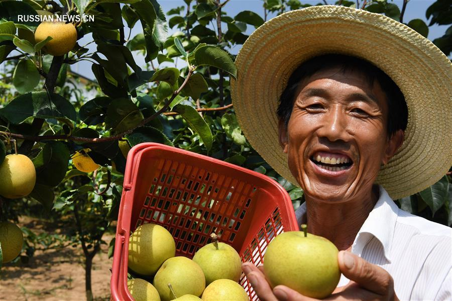 Развитие органического сельского хозяйства в зоне охраны красноногих ибисов
