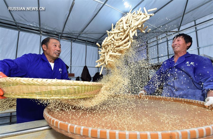 """Производственный сезон на """"родине коричневого сахара"""""""