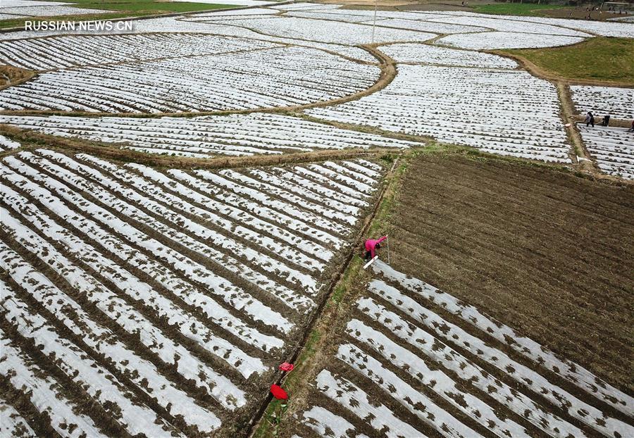 Выращивание грибов в горном уезде Цзяньхэ