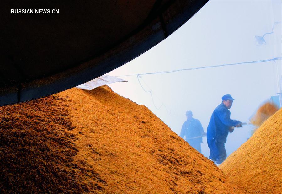 Производство лечебного вина из ветреницы в уезде Юаньцюй