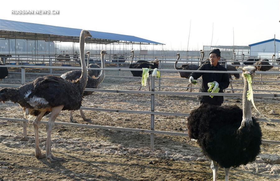 Три вида дохода у крестьян Цанчжоу
