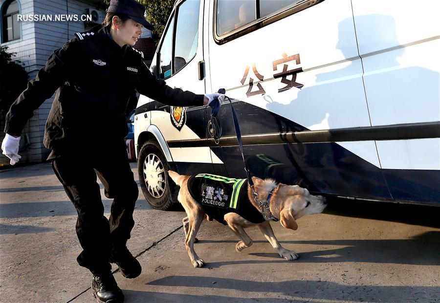 Зимние тренировки розыскных собак в Шанхае