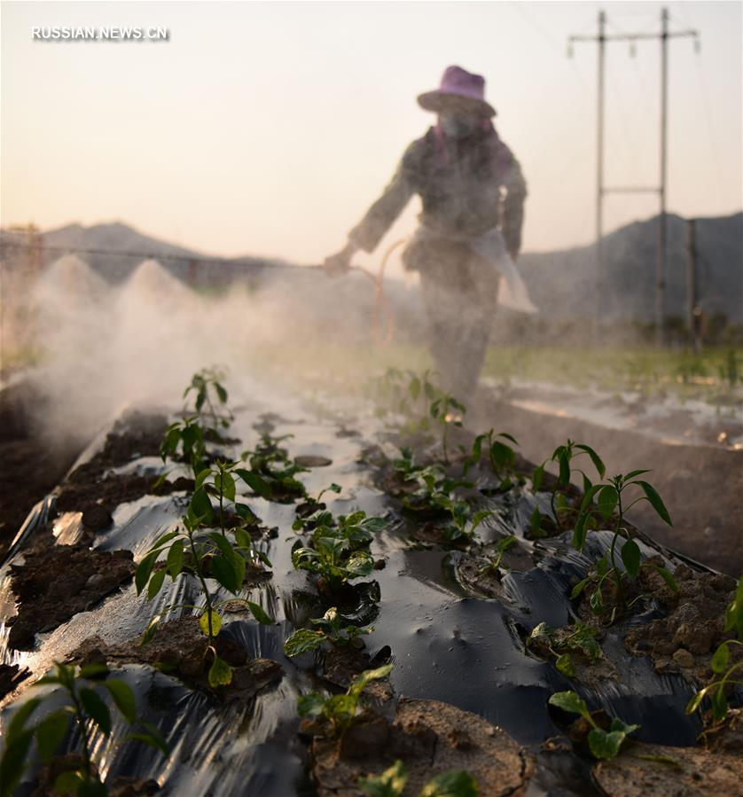 На полях Китая в разгаре весенние сельхозработы