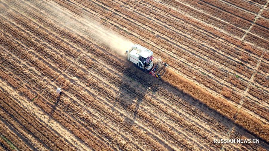 Китайские аналитики прогнозируют богатый летний урожай
