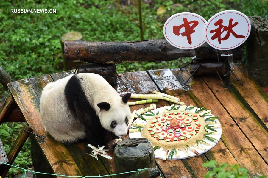Панду в зоопарке Чунцина поздравили с Праздником середины осени