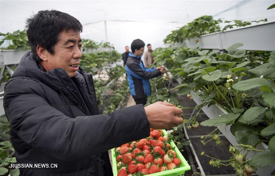 Передовые аграрные технологии приносят благосостояние фермерам из Шэньси