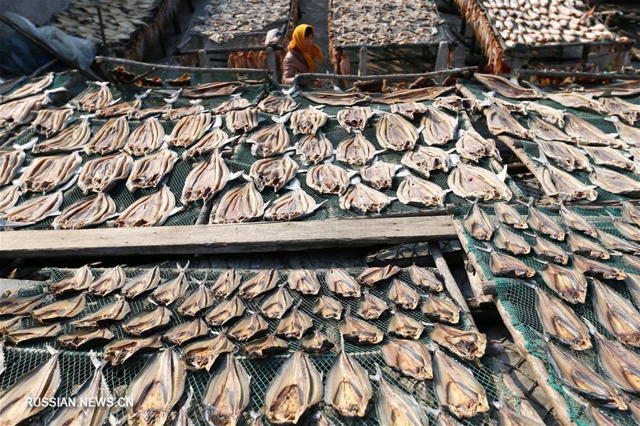 Зима -- пора заготовки вяленой рыбы в Циндао