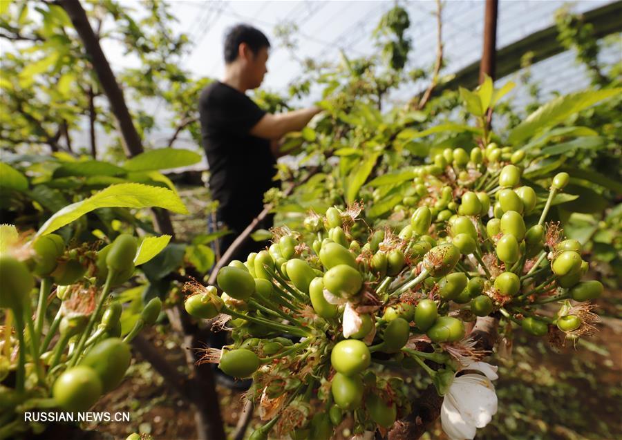 Сельскохозяйственные работы в первый месяц по лунному календарю