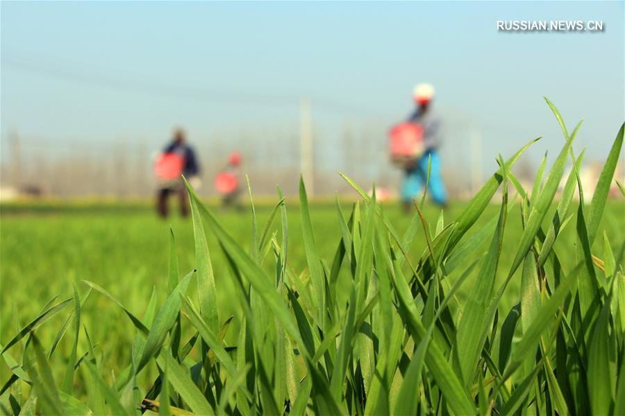 Весна на сельскохозяйственных угодьях Китая