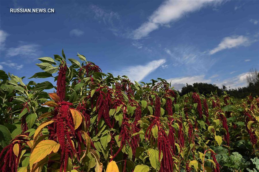 Горные пейзажи уезда Малун в провинции Юньнань