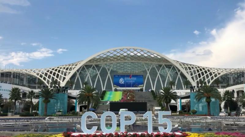 /СОР15/ Китай и Россия объединяют усилия для содействия глобальному устойчивому развитию в области биоразнообразия