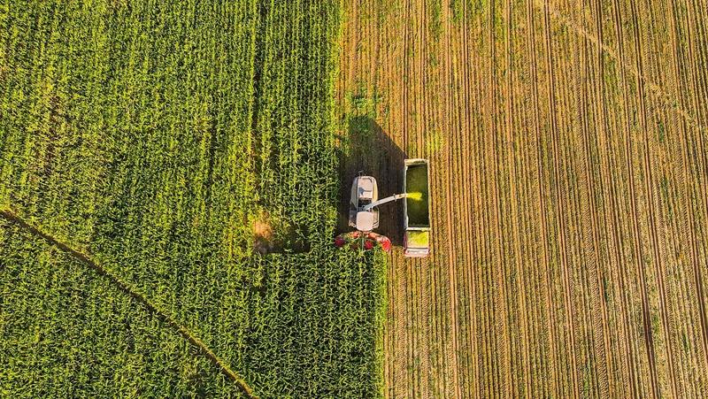 Осенняя жатва кукурузы на полях Ордоса