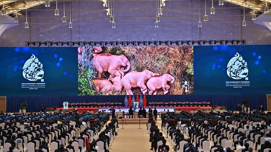 COP15 открылось в китайском городе Куньмин