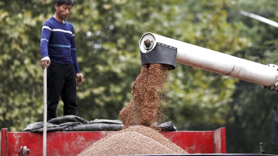 Китай вновь готовится собрать рекордный урожай зерновых