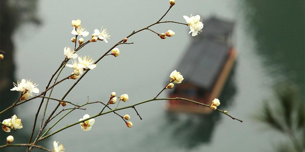 В Китай приходит весна