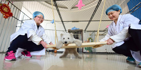 Белый медвежонок впервые появился на публике в океанариуме города Пэнлай