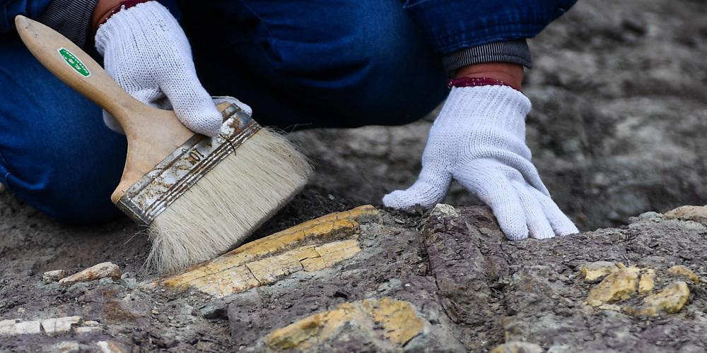 В провинции Цзилинь начались систематические раскопки на месте обнаружения окаменелых останков динозавров