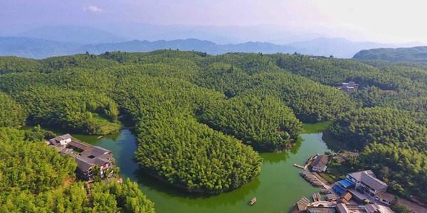"""""""Бамбуковое море"""" в провинции Сычуань"""