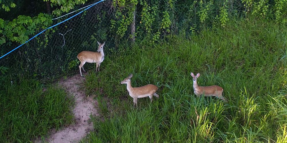 Редкие олени в заповеднике на острове Хайнань