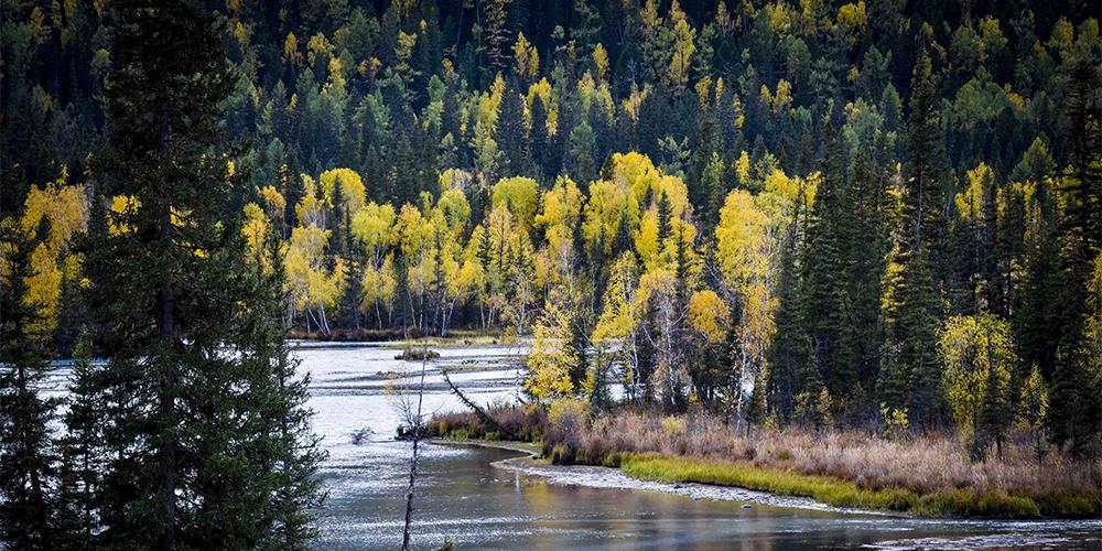 Осень на берегах заповедного озера в Синьцзяне