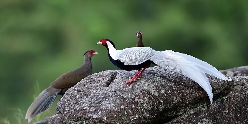 Диалог между человеком и птицей -- Будни заповедника Эсяньдун в провинции Фуцзянь