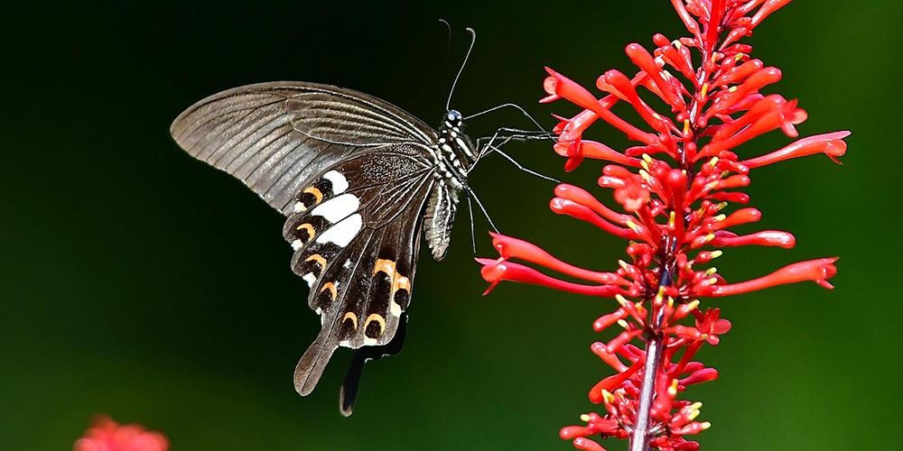 Бабочки в провинции Фуцзянь