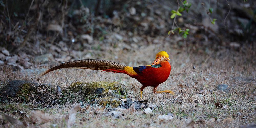 Уезд Янсянь стал раем для диких птиц более чем 340 видов