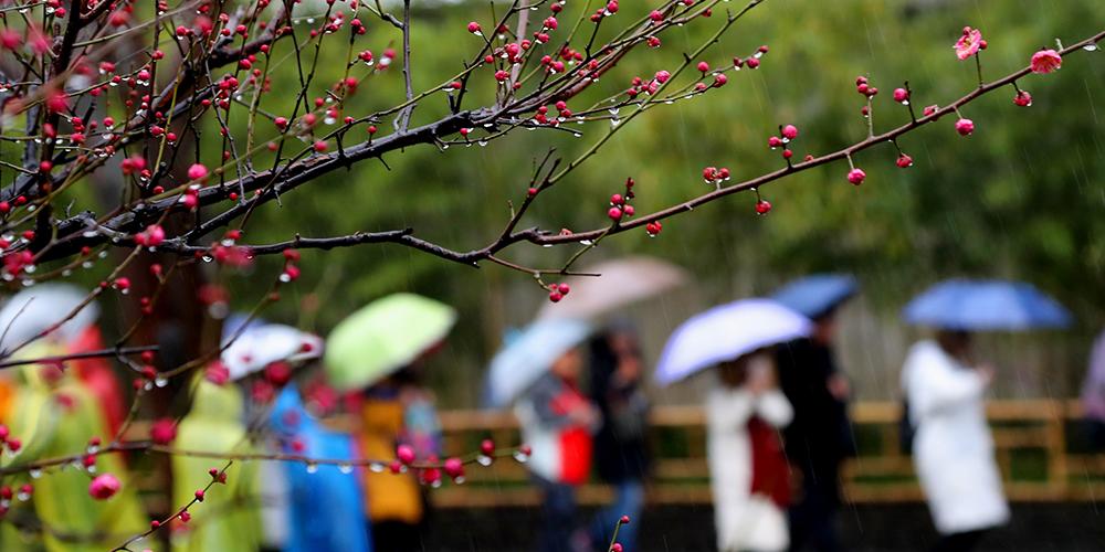 """""""Дождевая вода"""" и цветущие деревья на востоке Китая"""