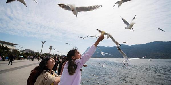 Жители Куньмина и гости города любуются чайками на озере Дяньчи