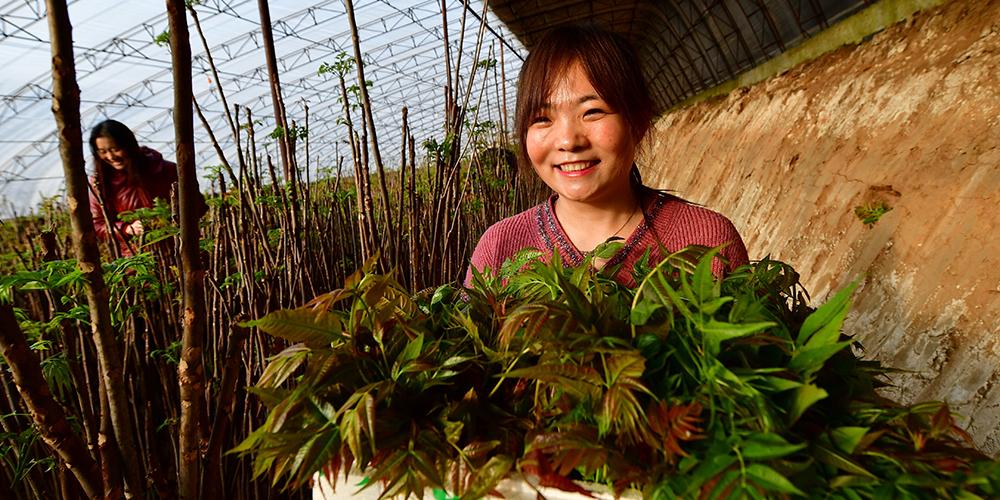 Крестьяне уезда Луаньсянь приступили к весенним сельхозработам