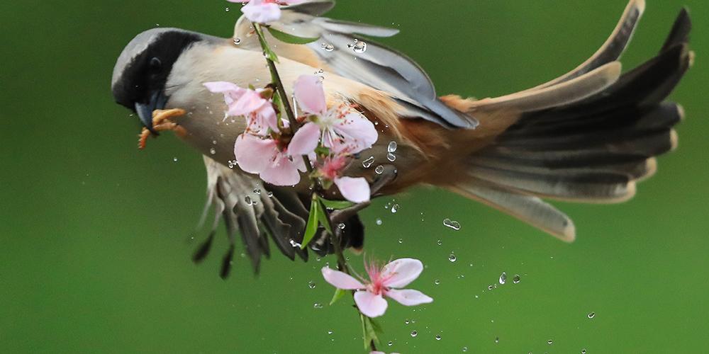 Птица среди цветов в Центральном Китае