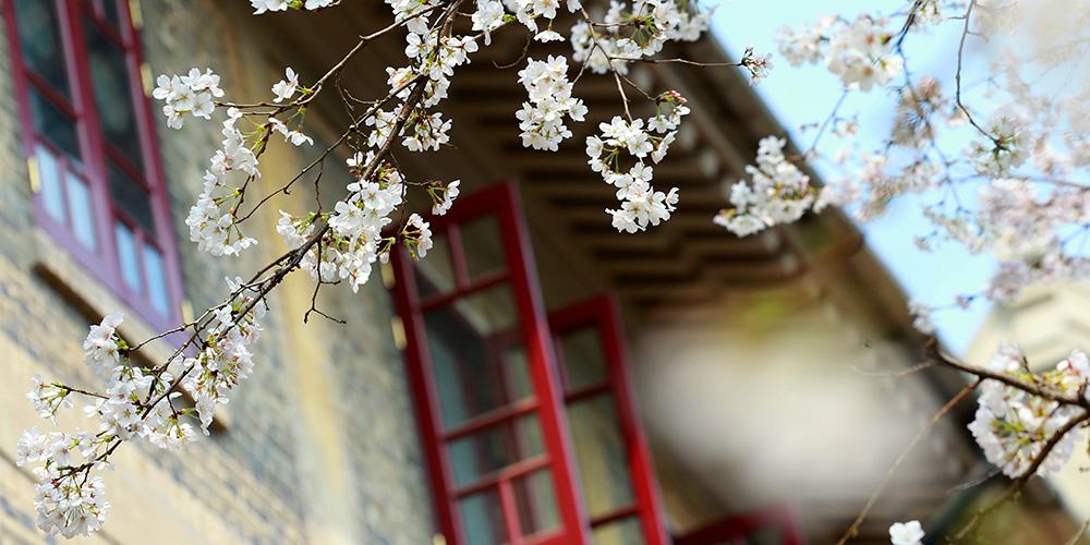 Цветы в Ухане