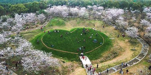 С приходом весны в Китае распустились цветы