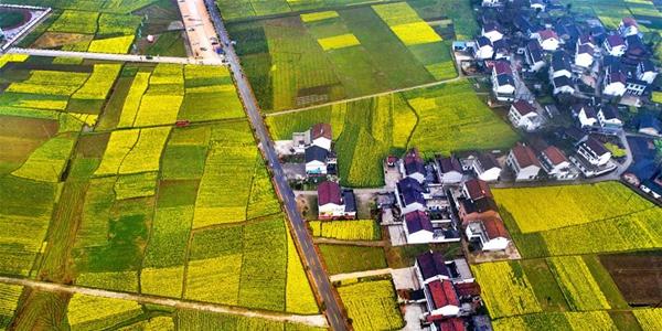 Зеленая весна в уезде Мяньсянь