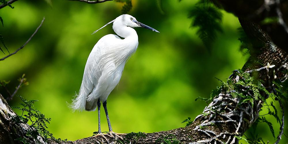 Птицы в парке Сиху города Фучжоу