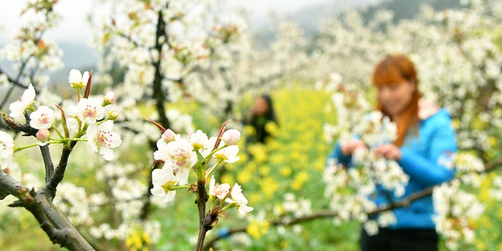 Весенние сельскохозяйственные работы в Китае
