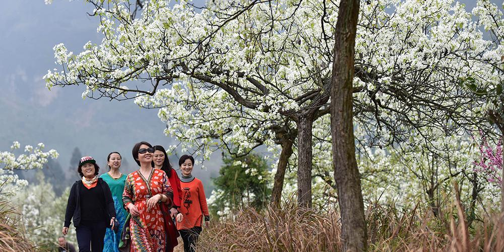Весна в сычуаньских горах