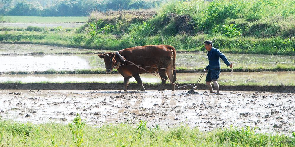 Весенние хлопоты китайских фермеров