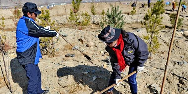 Тибетский АР запустил масштабный план по озеленению государственных земель