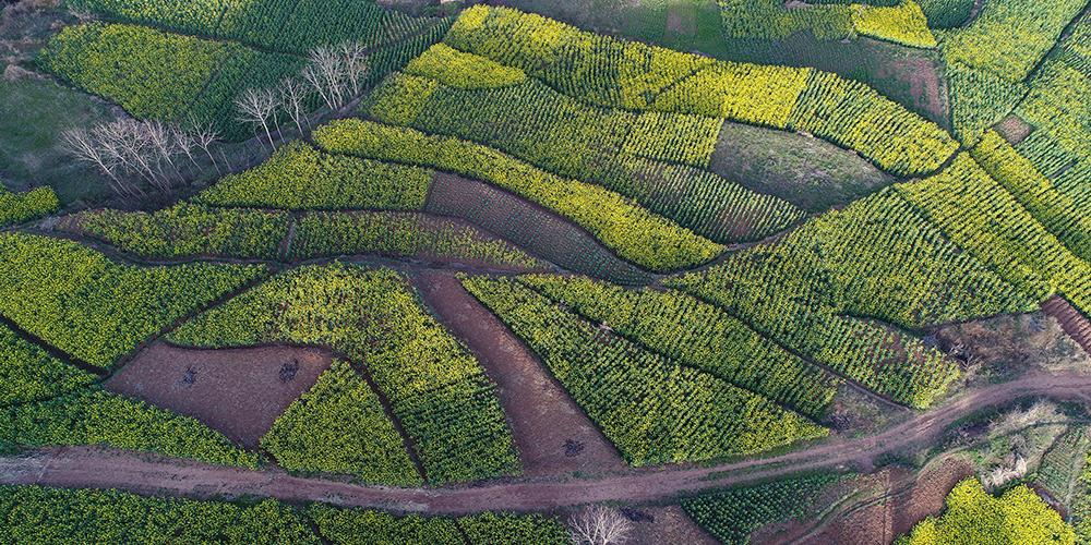 Золото и зелень: весна в Китае
