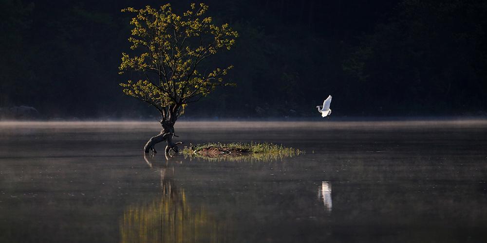 Цапля и одинокое дерево на озере Цишуху