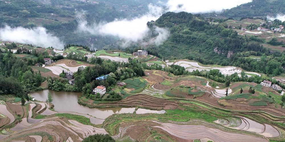 Красота весенних рисовых полей