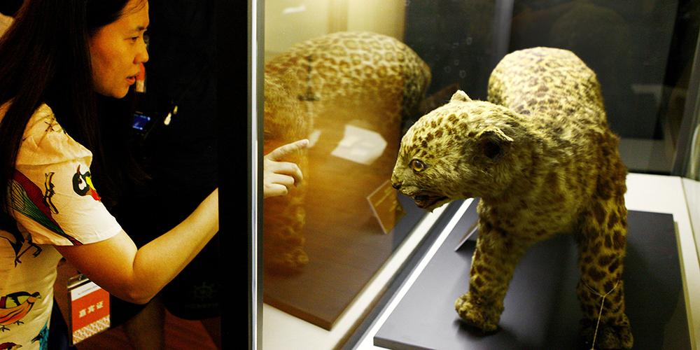 Три музея организовали совместную выставку о возникновении музейного дела в Шанхае