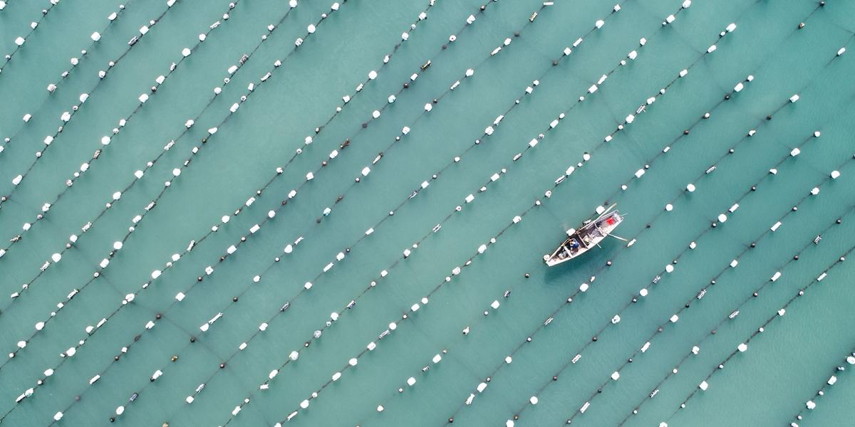 Лов больших желтых горбылей и мидий на морских фермах в поселке Наньцзи