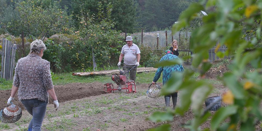 Осенние работы на земле в белорусской деревне