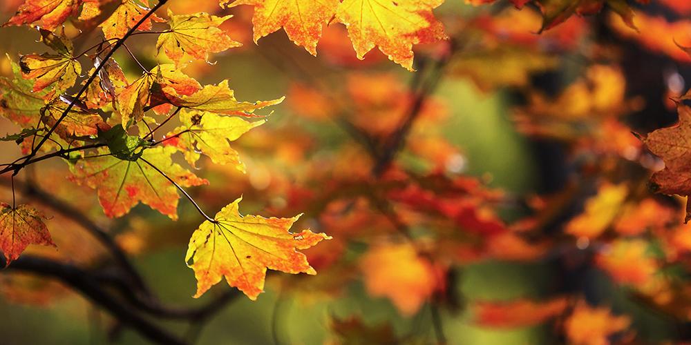 Как прекрасна осень в Поднебесной!