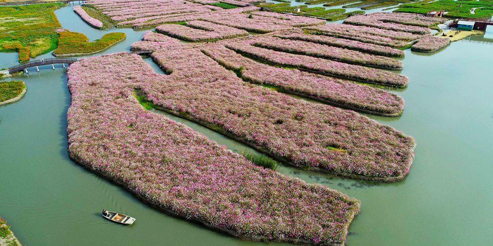 И осенью цветут поля в провинции Цзянсу!