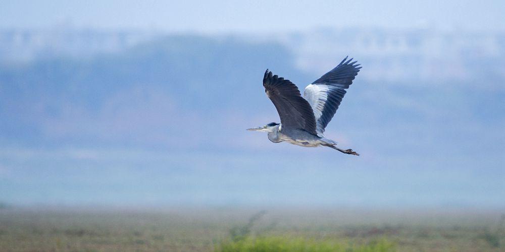 Перелетные птицы над заболоченными низинами на берегах озера Поянху